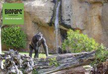 animales en bioparc fuengirola