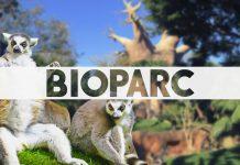 que saber antes de ir a bioparc