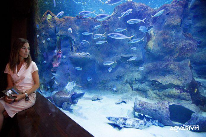 actividades acuario donosti