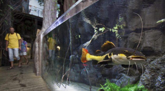 especies acuario de zaragoza