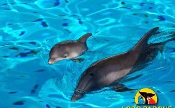 Loro Parque delfines