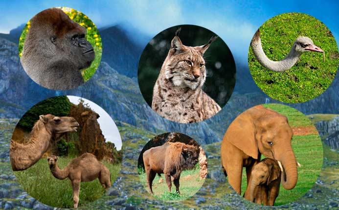 que animales ver en Cabárceno